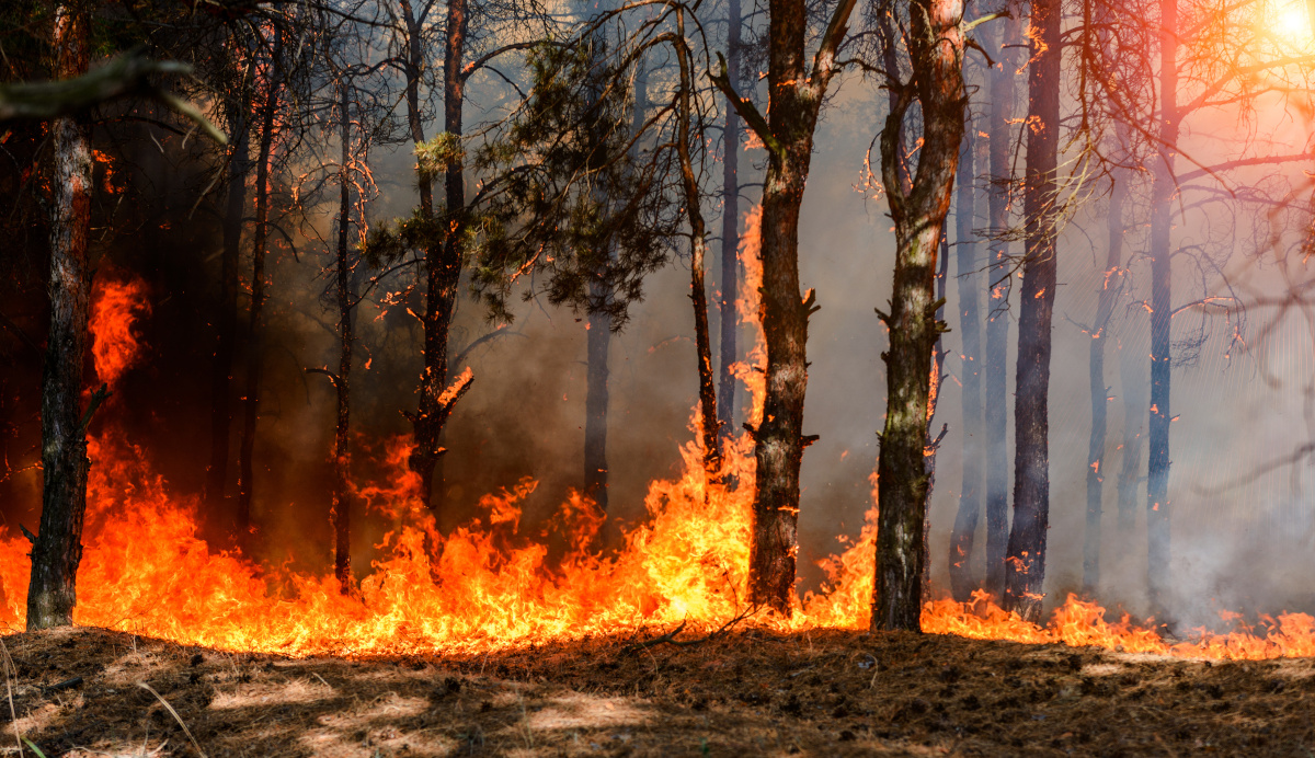 fires_2